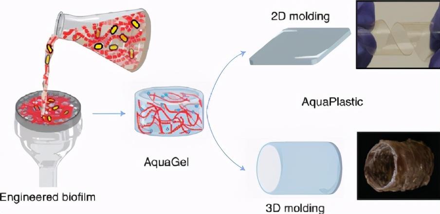 哈佛大学《自然·子刊》细菌培养物制备生物降解和可涂覆水生塑料